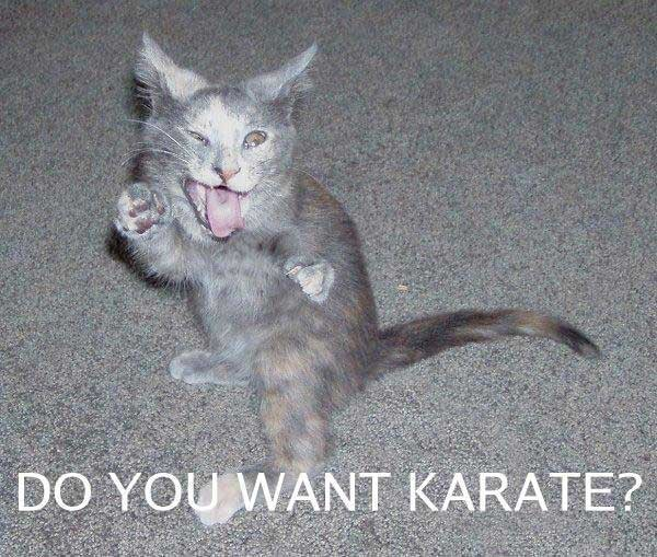 20012012160830-karate-cat_npoze.jpg